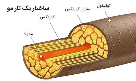 ساختار داخلی تار مو